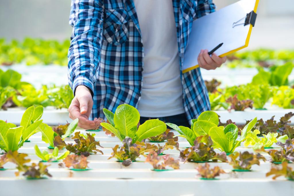 vegetable garden concept
